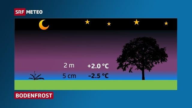 Schematische Darstellung des Bodenfrosts. In 5 cm über Grund liegt die Temperatur zum Beispiel bei -2.5 Grad, in 2 Meter Höhe bei +2 Grad.
