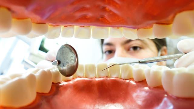 modell da dents e dentista.