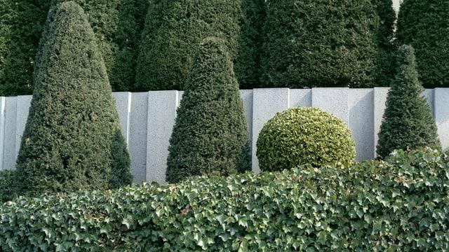 Vier getrimmte Büsche hinter einer Hecke, drei lange hohe und ein kleiner runder.