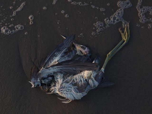 Toter Vogel am Strand