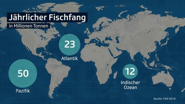 Heutzutage werden die meisten Fische im Pazifik gefangen. Das Mittelmeer ist kaum rentabel.