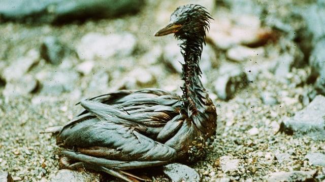 Ein Vogel voll mit Öl.