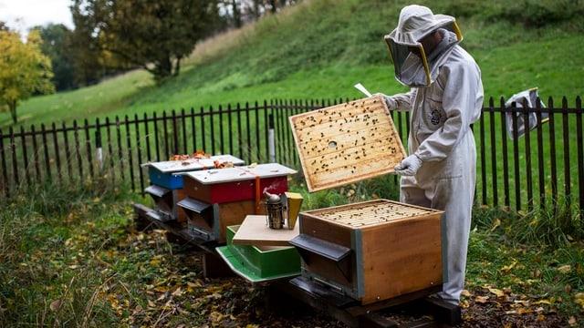 Ein Imker bei der Arbeit an seinen Bienenhäuschen.