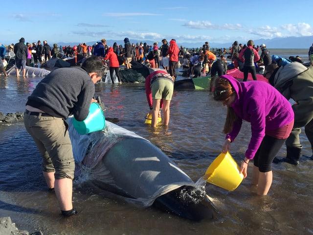 Wale am Strand und Helfer.