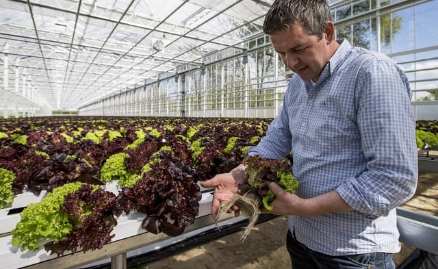 Gemüseunternehmer Patrick Forster im Gewächshaus.