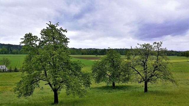 Blick auf saftig-grüne Wiesen und Bäume.