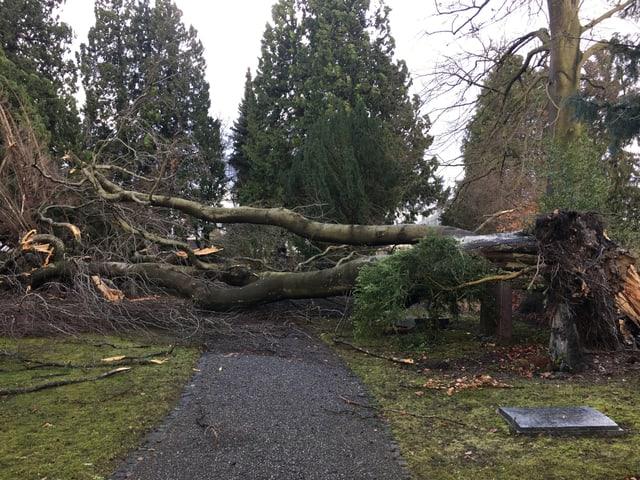 Umgestürzter Baum auf einem Friedhof in Aarau.