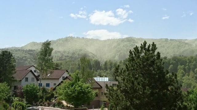 Pollensturm über den Nadelwäldern am Albis.