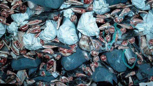 Haifischflossen
