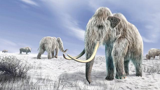 Steckbrief Mammut
