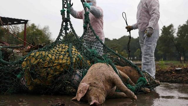 In Sicherheitskleidung verpackte Helfer hieven in Shanghai ein Netz voller toter Schweine auf die Mole.