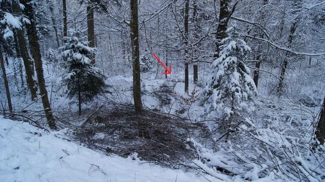 Die Unfallstelle im Wald bei Baar gleicht einem Suchbild: Wo ist das Auto?