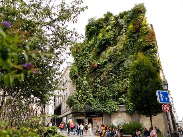 Eine Hausfassade, an der Sträucher und Pflanzen wachsen.