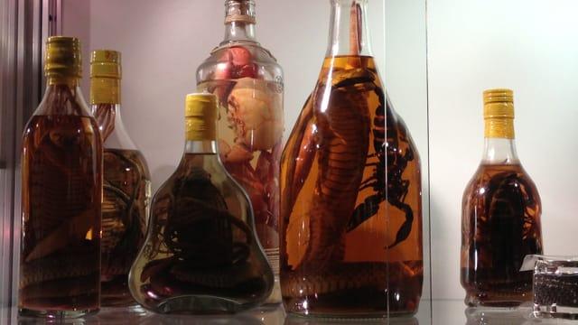 Schlangen und Skorpione in Flaschen