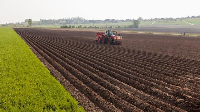 Kartoffelfeld in Hagneck.
