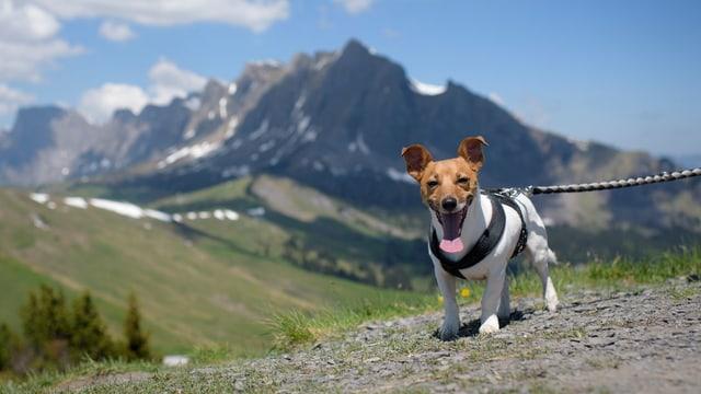Ein Hund in den Bergen.