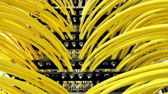 Zahlreiche gelbe Kabel bei einem Computerserver.