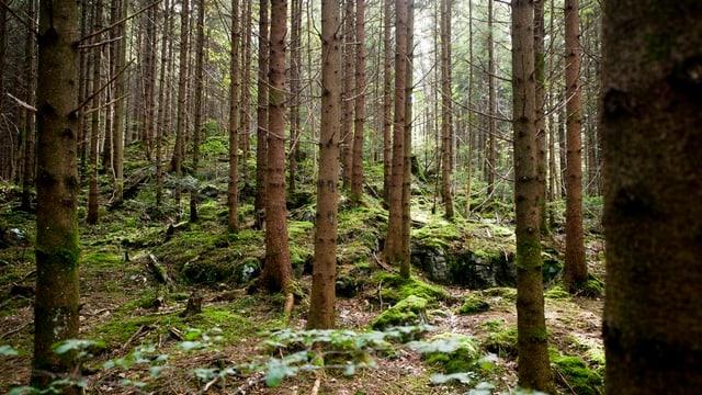 Blick in ein Waldstück