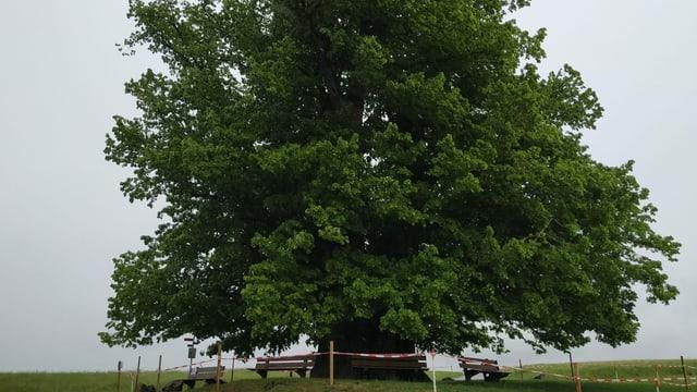 Wissenswertes über den Umgang mit Bäumen
