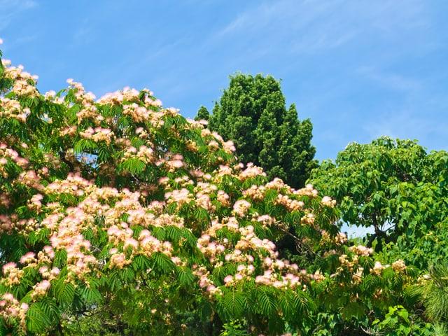 Blühende Bäume, Blick ins Grüne.