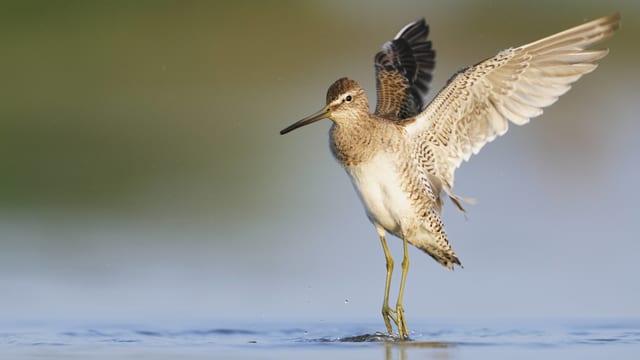 Ein Vogel mit ausgebreiteten Flügeln.