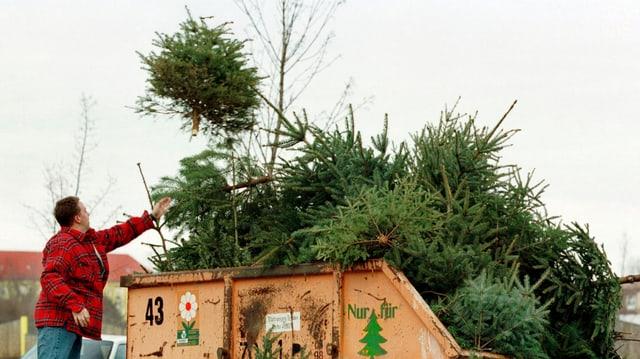 Ein Mann entsorgt einen Christbaum in einer Mulde.