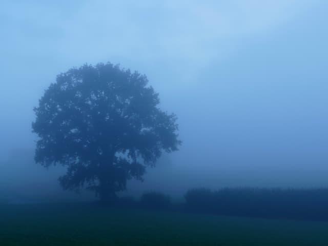 Die Silhouette eines Baumes und des Waldes sieht der Betrachter durch den seichten Nebel.