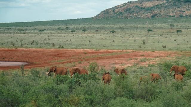 Elefanten auf der Zugfahrt von Mombasa nach Nairobi