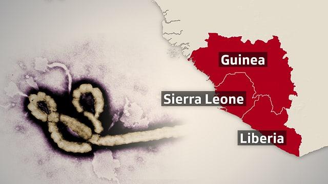 Kartenausschnitt von Afrika mit den betroffenen Ländern und einem Bild des Ebola-Virus.