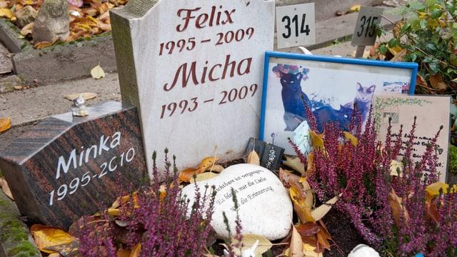 Grabsteine auf einem Tierfriedhof.