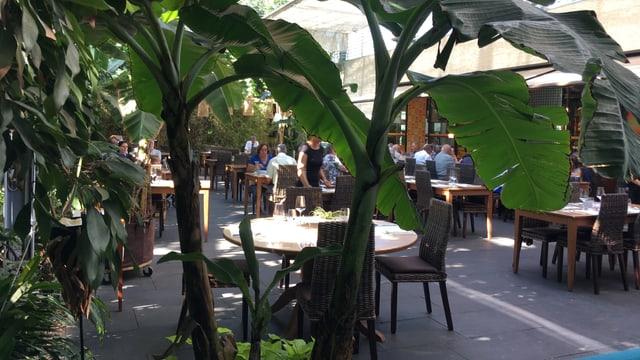 Blick ins Restaurants des Tropenhauses in Wolhusen.