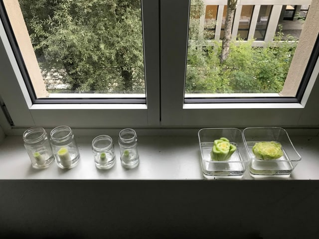 Gemüseresten auf Fenstersims.
