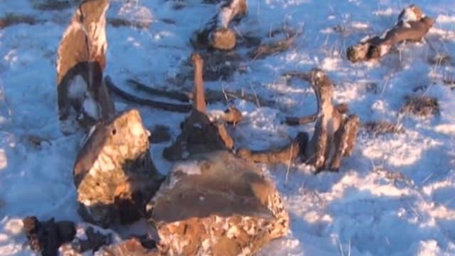Skelletreste im Schnee