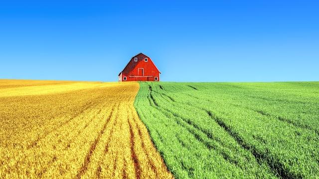 Bauernhof und Weizenfeld