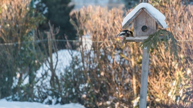 Ein Buntspecht sitzt auf einem Vogelhaus und frisst.
