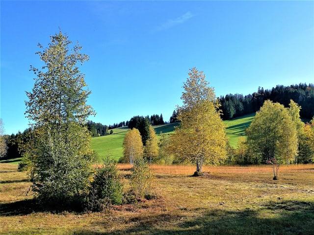 Farbige Bäume im Herbst