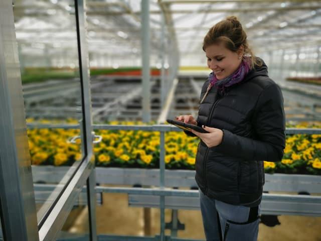 Eine Mitarbeiterin von Rutishauser steht mit einem Tablet in einem riesigen Gewächshaus.