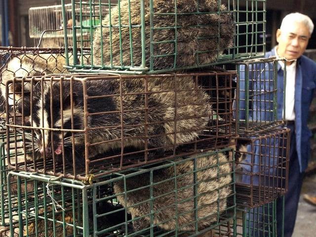 Zibetkatzen auf einem Markt in der südchinesichen Provinz Guangdong