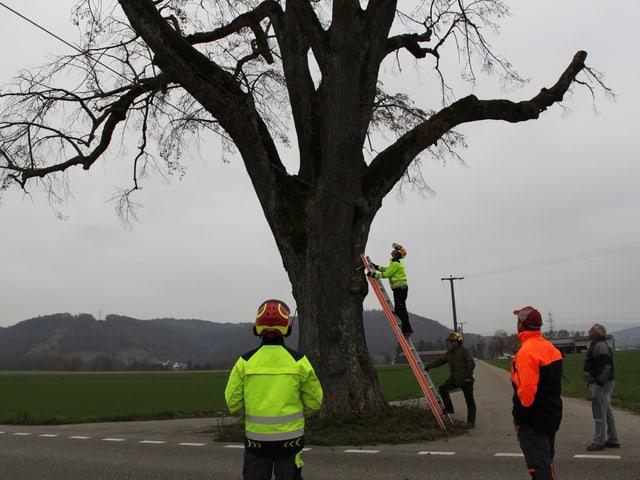 Baum wird untersucht