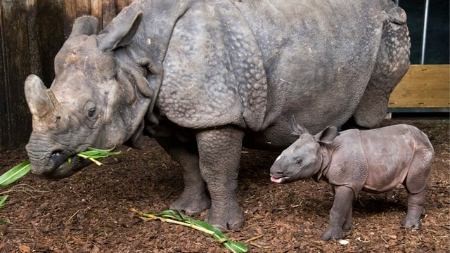 Mutter Nashorn mit dem kleinen.