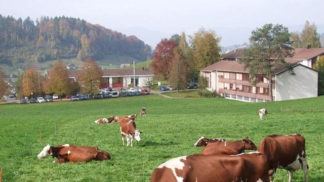 Der Bauernverband Aargau befürchtet wegen Asylbewerbern einen Imageschaden für die landwirtschaftliche Schule Liebegg.