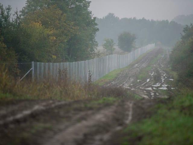 Metallzaun im Nebel, drumherum Bäume und Dreck.