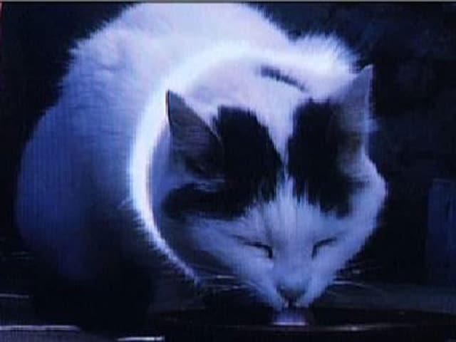 Das Filmstill der Videoinstallation zeigt eine Katze, die Milch leckt.