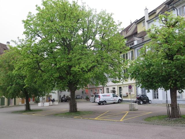 Ein Platz, darauf drei Bäume mit grünen Blättern.