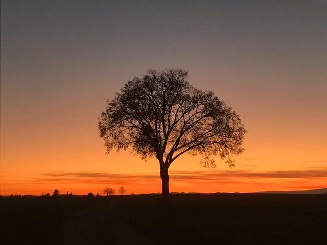 Sonnenuntergang und ein Baum auf einer dunklen Wiese.