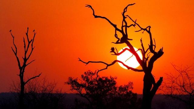 Hinter einem ausgetrockneten Baum die Sonne