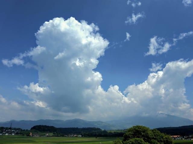 Grosse Quellwolke wächst empor.