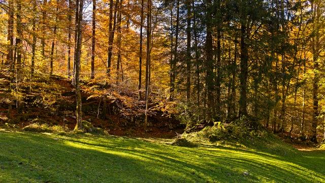 Waldrand im Herbstlicht