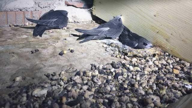 Drei Vögel in