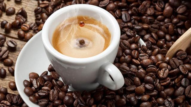 Service: Der Weg zum perfekten Espresso